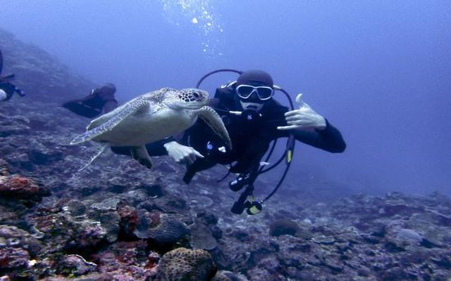 diving-with-turtle